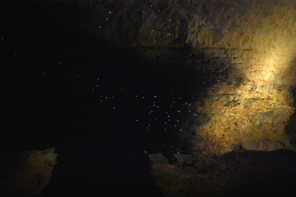 Glow Worms Ruakuri Cave New Zealand