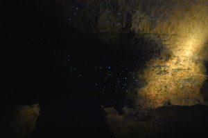 Glow Worms Ruakuri Cave New Zealand