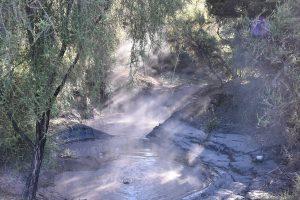 Thermal Pool Kuirau Park Rotorua
