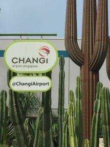 Sleeping in airports Changi